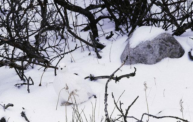 15-animaux-maitres-camouflage-07