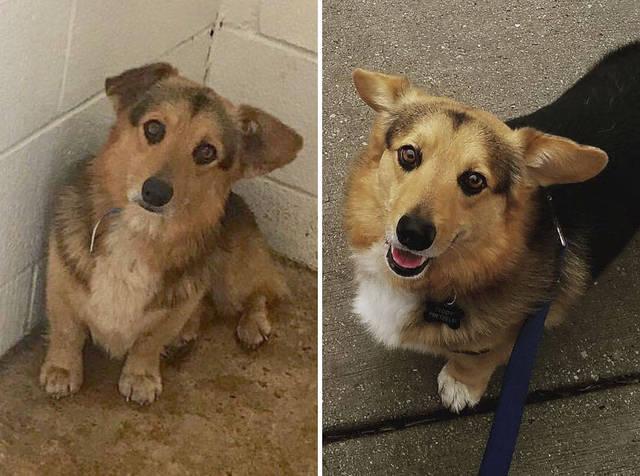 adoptions-chiens-heureux-03