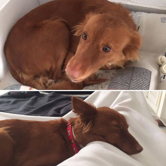 adoptions-chiens-heureux-09