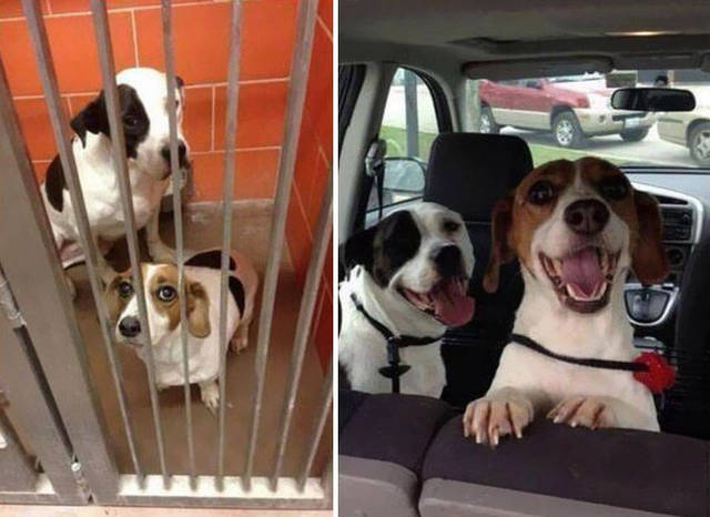 adoptions-chiens-heureux-13