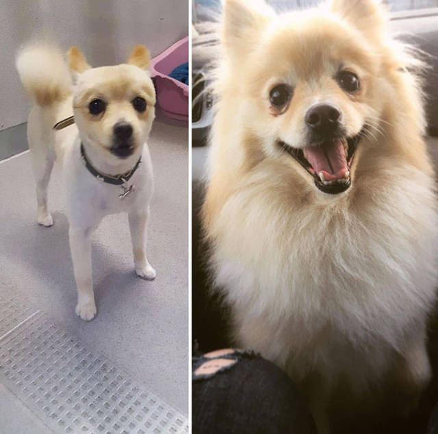 adoptions-chiens-heureux-16