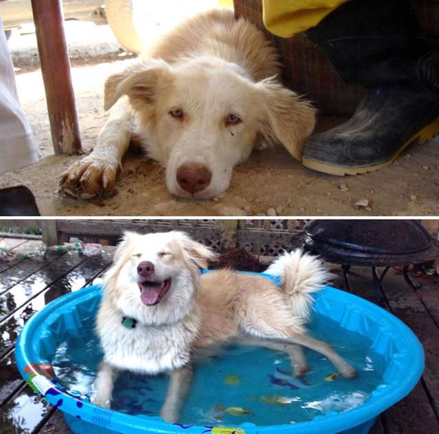 adoptions-chiens-heureux-26