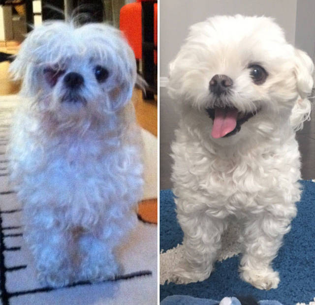 adoptions-chiens-heureux-27
