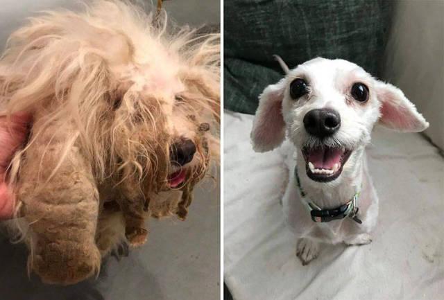 adoptions-chiens-heureux-29