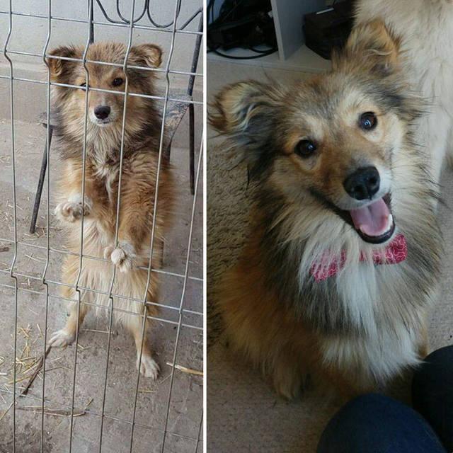 adoptions-chiens-heureux-33