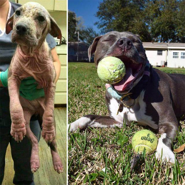 adoptions-chiens-heureux-35