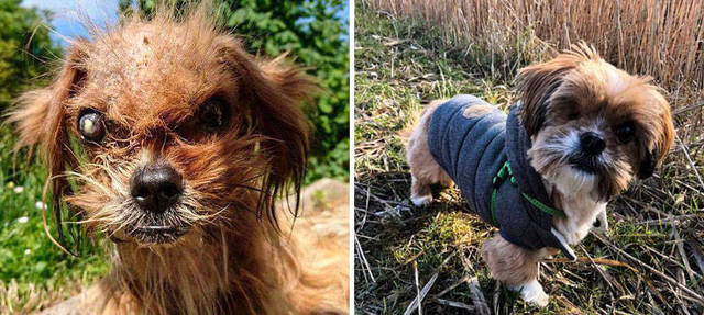 adoptions-chiens-heureux-38