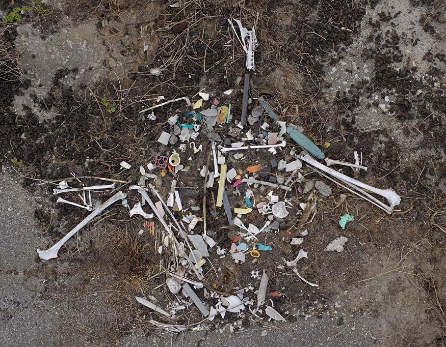 albatros-morts-01