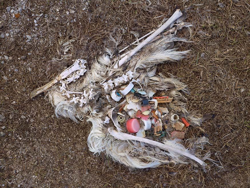 albatros-morts-03