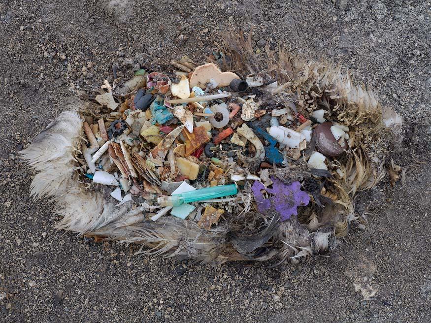 albatros-morts-31
