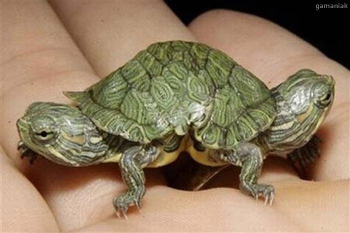 deux-tortues-pour-carapace