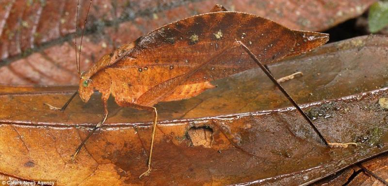 animaux-maitres-camouflage-04