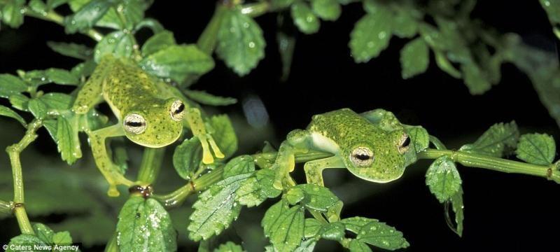 animaux-maitres-camouflage-05
