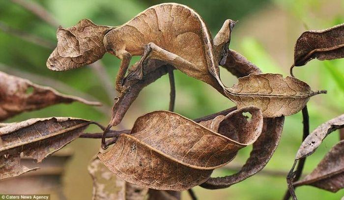 animaux-maitres-camouflage-06