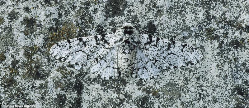animaux-maitres-camouflage-11