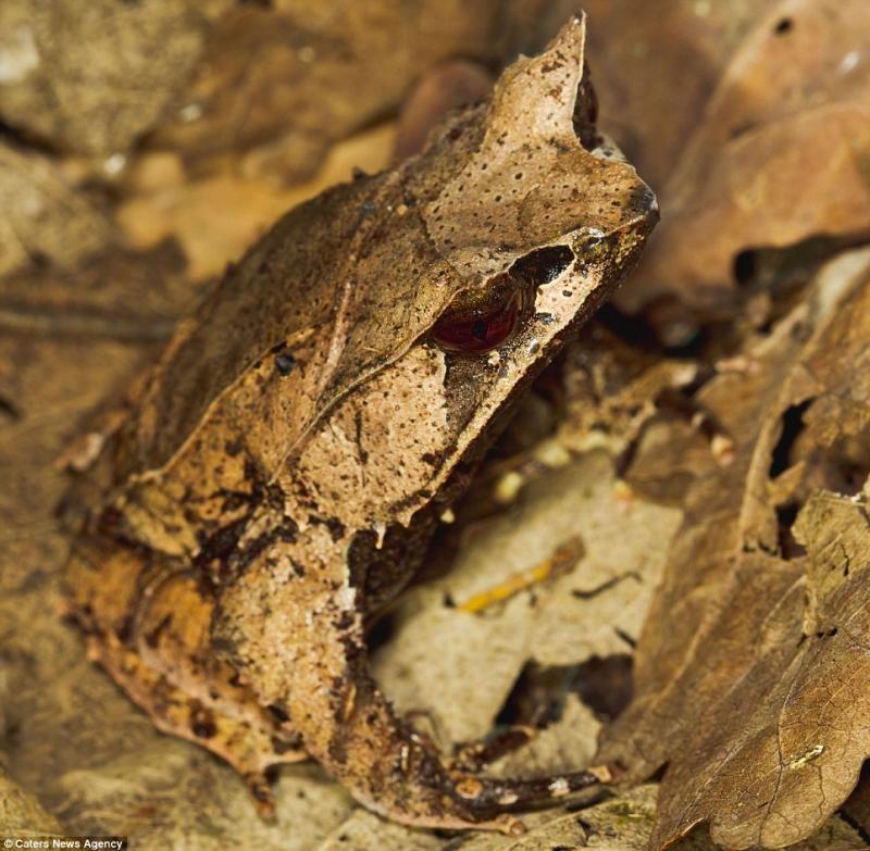 animaux-maitres-camouflage-12