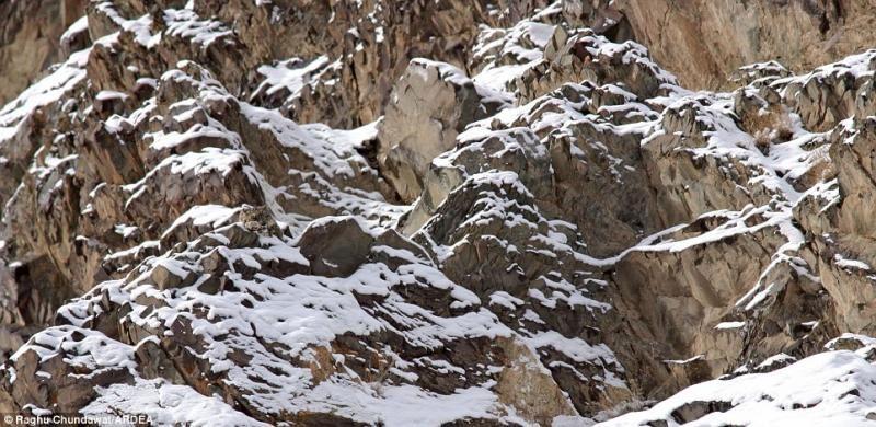 animaux-maitres-camouflage-13
