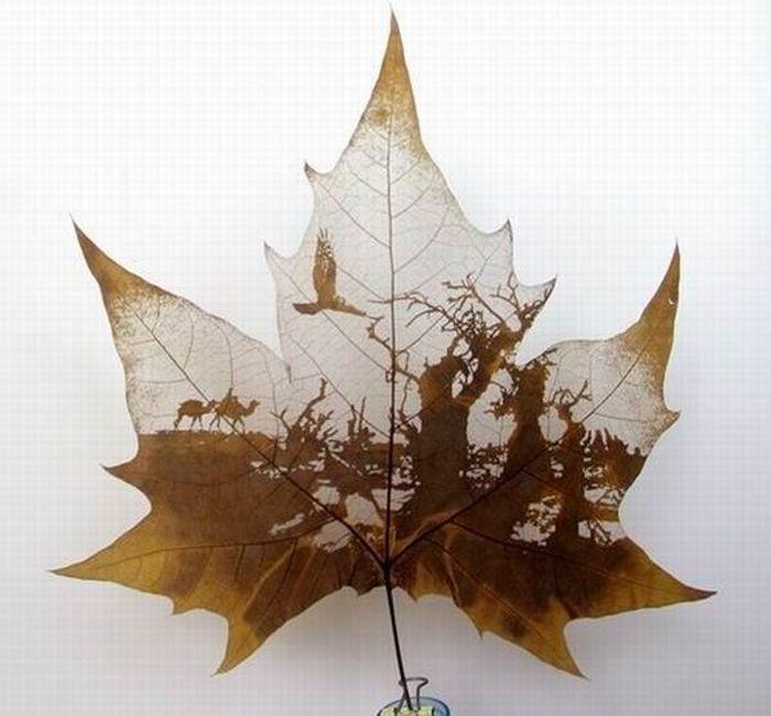 dessins-feuilles-arbres-06