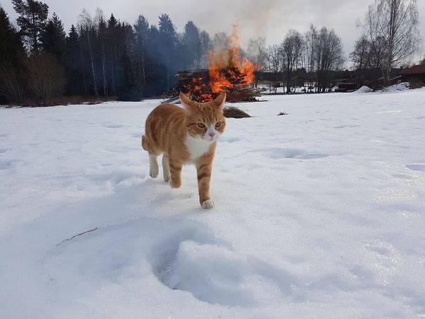 chats-diaboliques-01