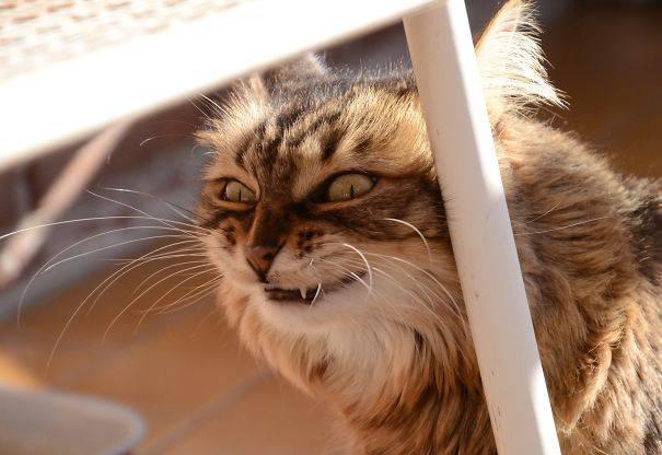chats-diaboliques-10