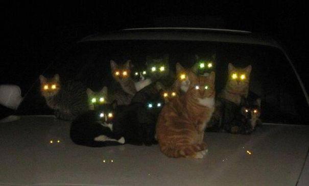 chats-diaboliques-14