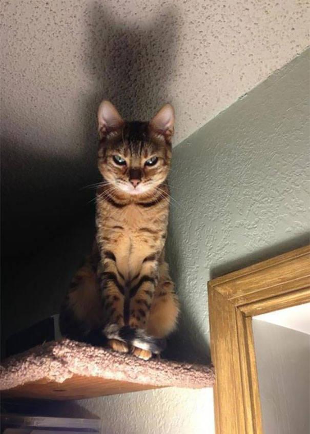 chats-diaboliques-15