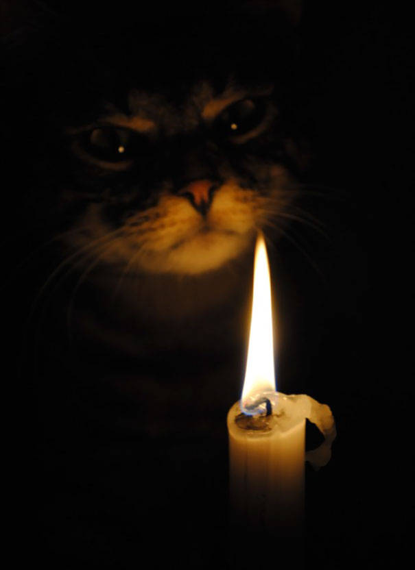 chats-diaboliques-16