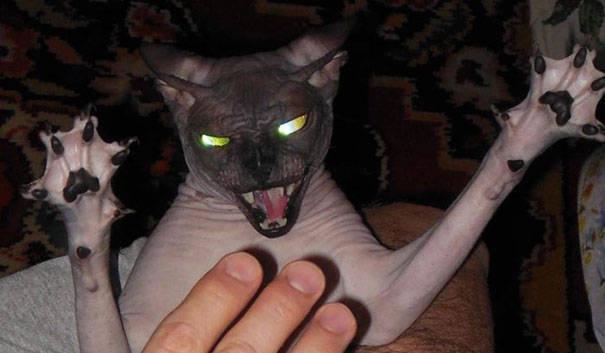 chats-diaboliques-17