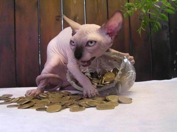chats-diaboliques-19