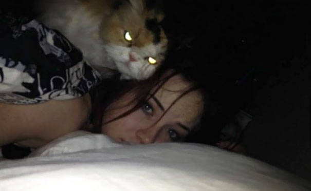 chats-diaboliques-26