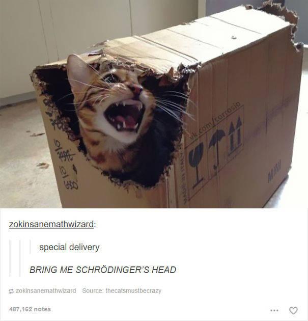 chats-diaboliques-28