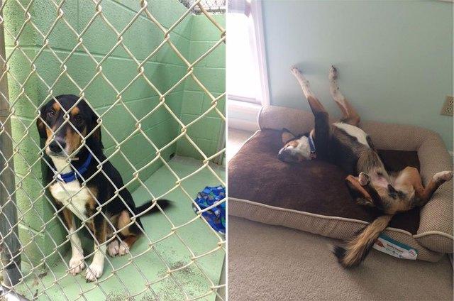 chiens-avant-apres-adoption-02