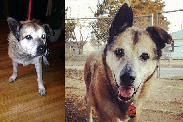 chiens-avant-apres-adoption-07