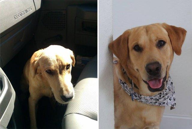 chiens-avant-apres-adoption-11