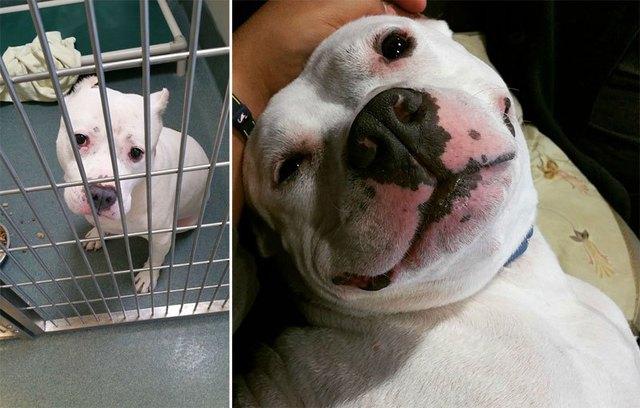 chiens-avant-apres-adoption-13