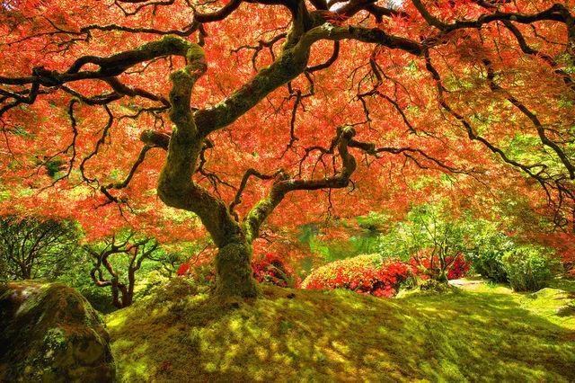 couleurs-automne-02