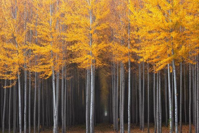 couleurs-automne-03