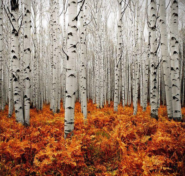 couleurs-automne-11