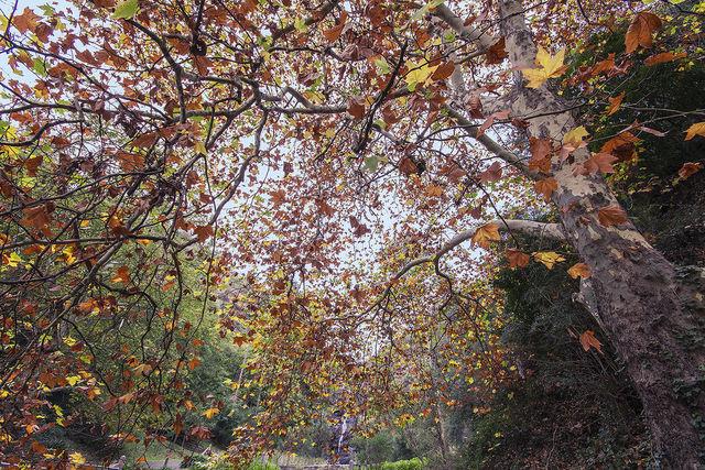 couleurs-automne-21