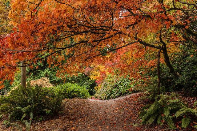 couleurs-automne-25