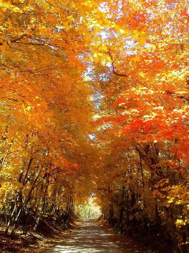 couleurs-automne-28