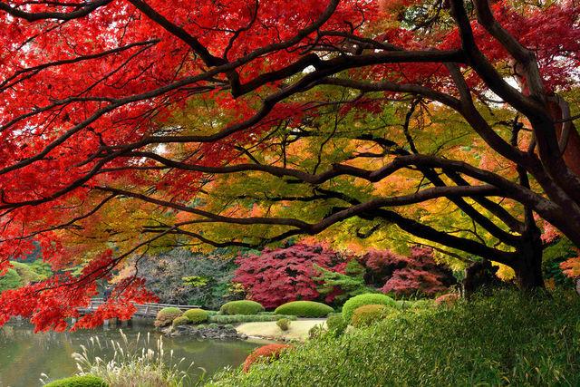 couleurs-automne-29