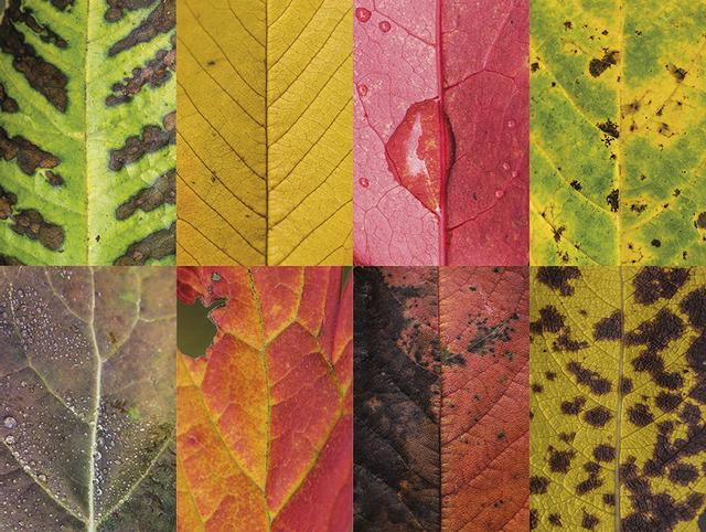 couleurs-feuilles-automne-02