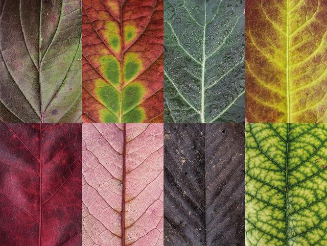 couleurs-feuilles-automne-03