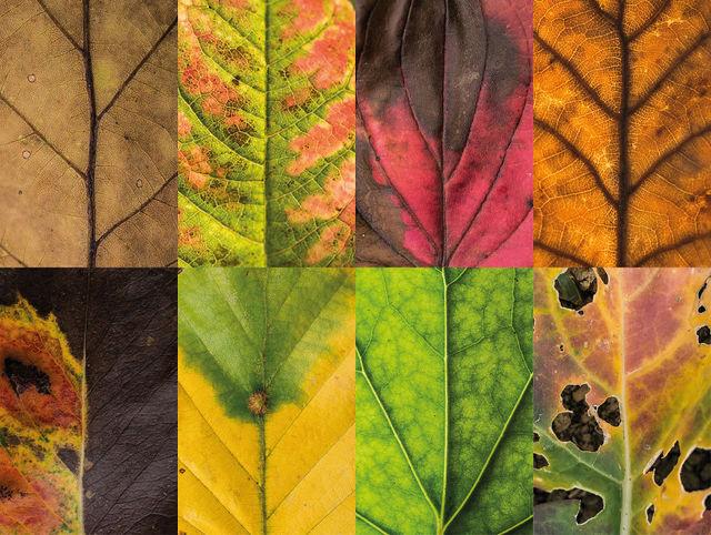 couleurs-feuilles-automne-04