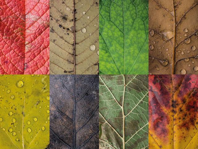 couleurs-feuilles-automne-05