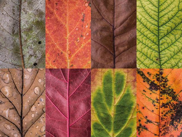 couleurs-feuilles-automne-06