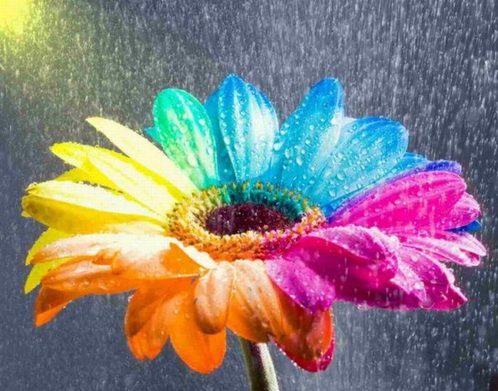 fleurs-colores-01