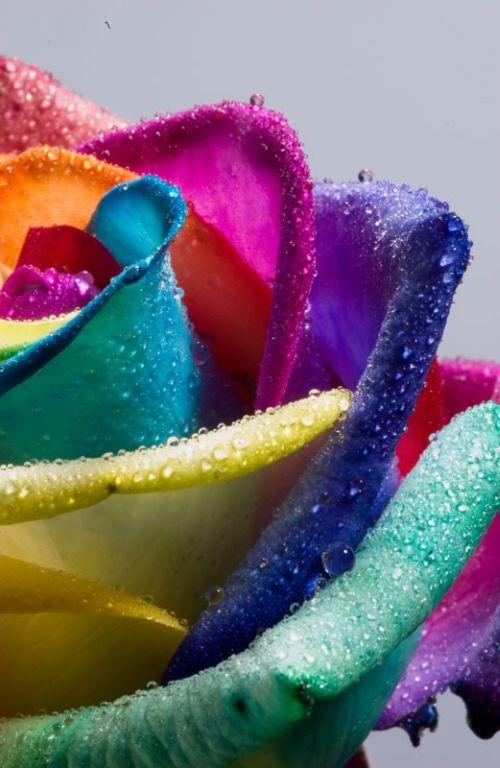fleurs-colores-02