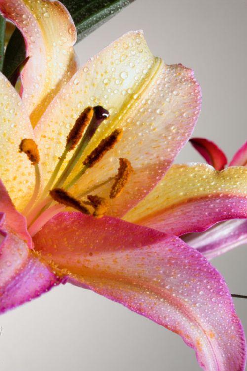 fleurs-colores-03